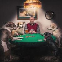 gratisography-man-dogs-playing-cards-small-thumbnail